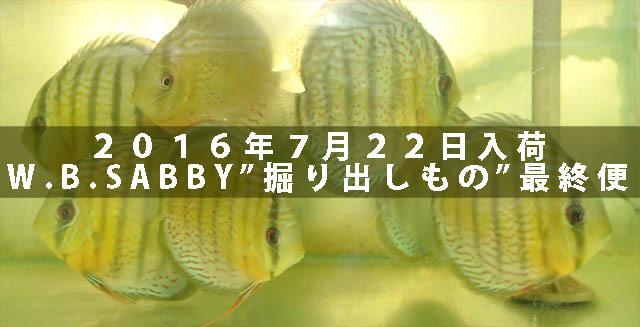 20160722WBSABBY入荷640.jpg