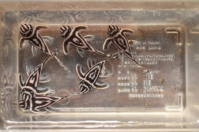 DSC_6475a両側ライン切れ5.5cm±.jpg