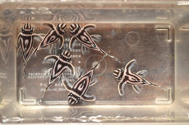 DSC_6476a片ライン切れ5.5cm±.jpg