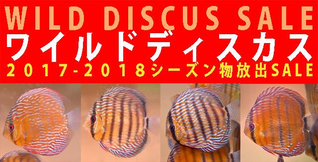 ワイルド2017-20180シーズン物SALE!!640.jpg