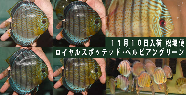 2016年11月10日入荷松坂便640.jpg