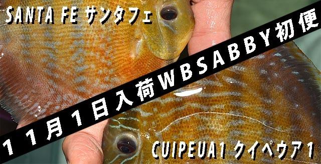 2018年11月1日WBSABBY便640.jpg